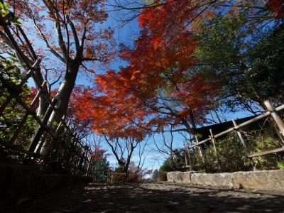 上尾丸山公園_a0027275_18171049.jpg