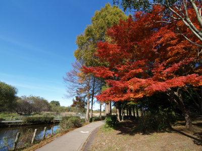 上尾丸山公園_a0027275_18181094.jpg