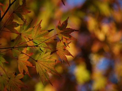 上尾丸山公園_a0027275_1821453.jpg