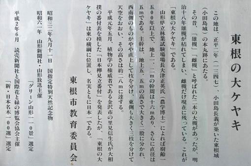 11月初旬連休旅行09 : 東根の大ケヤキ_e0054299_8581283.jpg