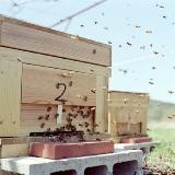 展覧会■小林キユウ写真展「ミツバチを育てながら。」_e0091712_13394020.jpg