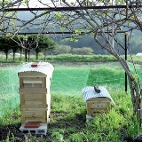展覧会■小林キユウ写真展「ミツバチを育てながら。」_e0091712_13414162.jpg