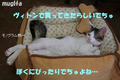 f0063729_223515.jpg