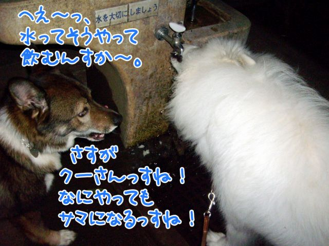 c0062832_17174957.jpg