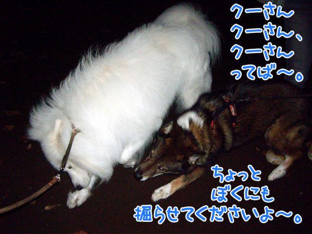 c0062832_1718365.jpg