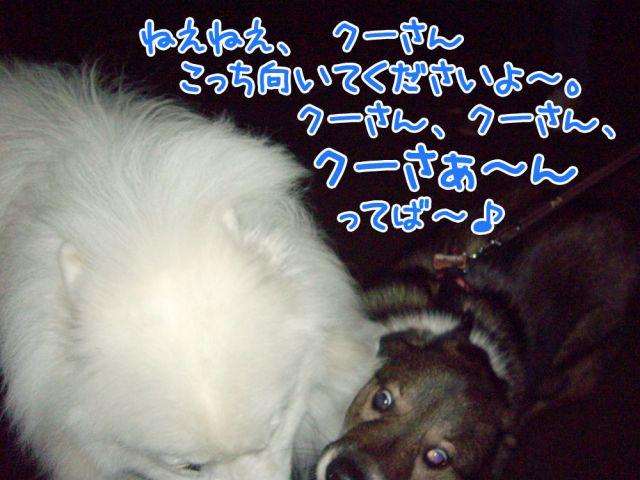 c0062832_1719684.jpg