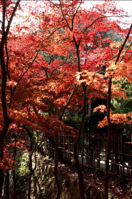 日本民家園の紅葉_f0044056_17501570.jpg