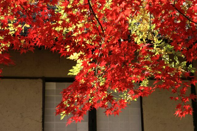 日本民家園の紅葉_f0044056_1750191.jpg
