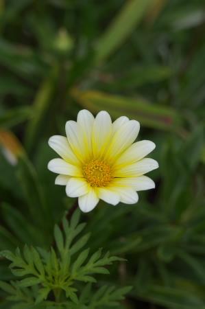 白い花_c0006767_844064.jpg