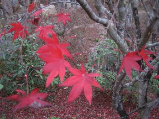 秋たけなわ。_f0085369_215169.jpg