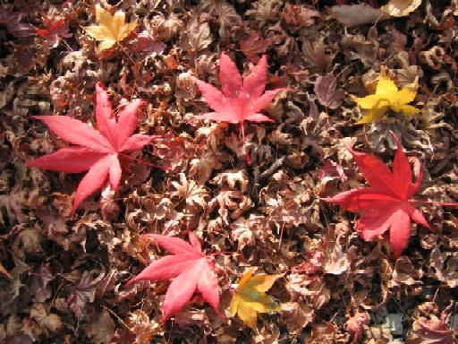 秋たけなわ。_f0085369_2155167.jpg