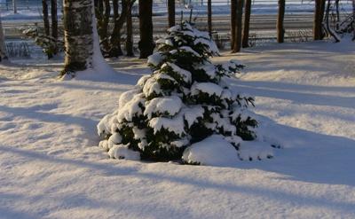 雪一面の朝_c0062295_8125233.jpg