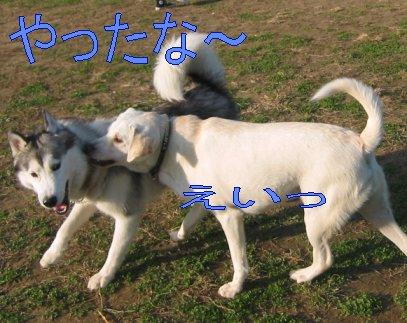 f0112407_0153038.jpg