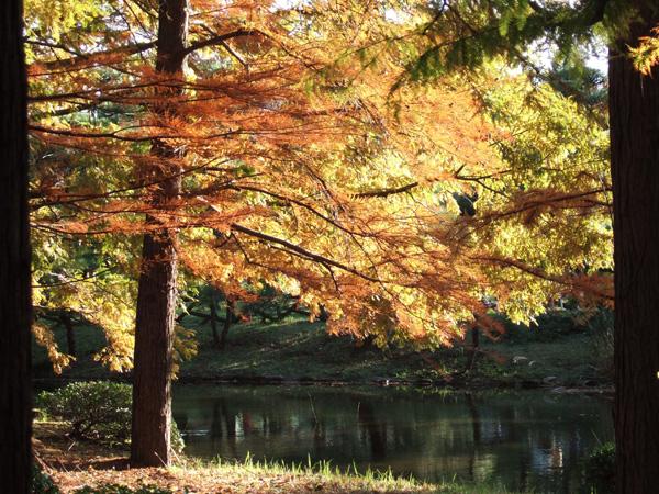 神代植物園の秋_f0012718_21464877.jpg