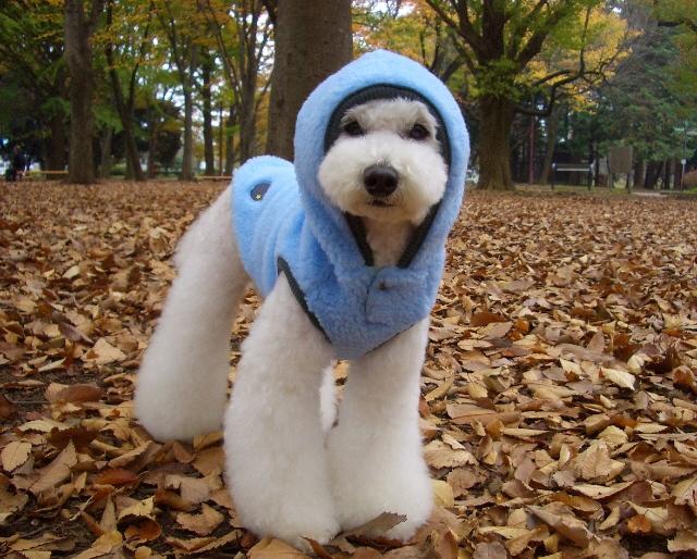 it\'s cold_d0083623_18374487.jpg
