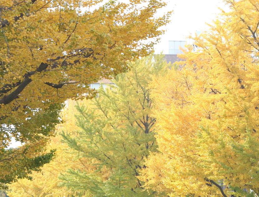 横浜アルテリーベ様の装花 ドアのリース_a0042928_19421432.jpg