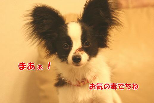 d0013149_0262733.jpg
