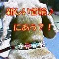 b0108053_18231595.jpg