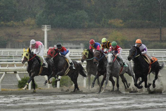 2006年11月26日(日) 高知競馬 6R_a0077663_2147192.jpg