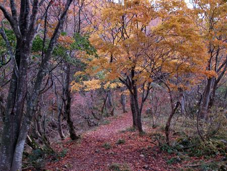 鈴鹿霊仙山へ(1)_c0024167_1919448.jpg