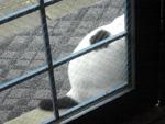 猫に美味しい_c0052692_1950981.jpg