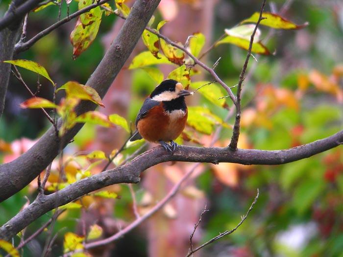 庭に来る野鳥_e0016894_17491878.jpg