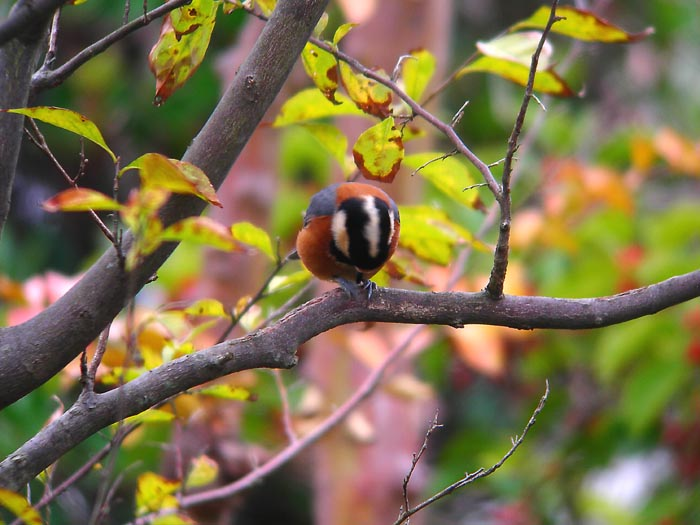 庭に来る野鳥_e0016894_17494990.jpg