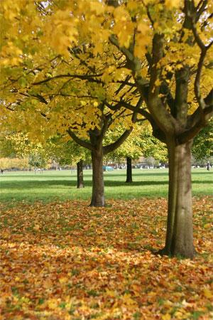 *私が毎年ロンドンに行くわけ*_d0000304_18262533.jpg