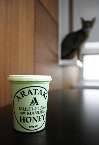 [猫的]ニュージーランドから_e0090124_834585.jpg