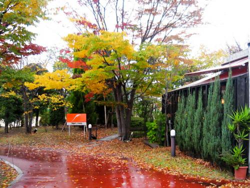 赤っぽい色の舗装道路、小道の両脇は木々でいっぱい。黄色や赤に色づいてここだけ切り取ったら、街中とは思えない雰囲気。お店のテラスが少し見えている風景です。雨が降っているので一層艶やかで綺麗な木々です。