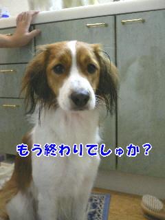 d0013149_0233281.jpg