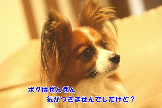 d0013149_2363243.jpg