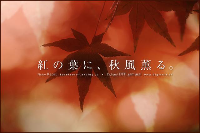 collaboration 「紅の葉に、秋風薫る。」_a0054755_2091787.jpg