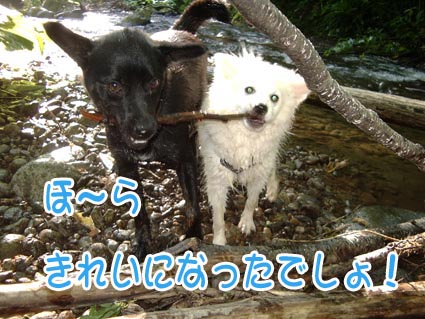 c0105157_19455043.jpg