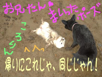 c0105157_1958088.jpg