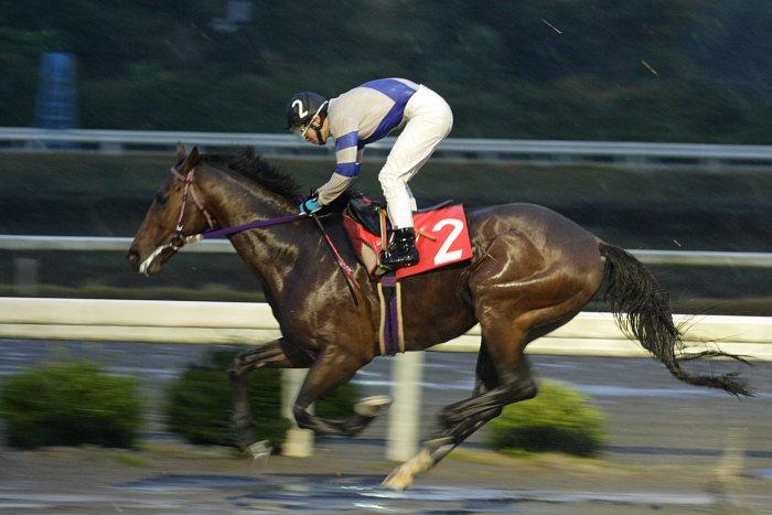 2006年11月26日(日) 高知競馬 10R_a0077663_1817257.jpg