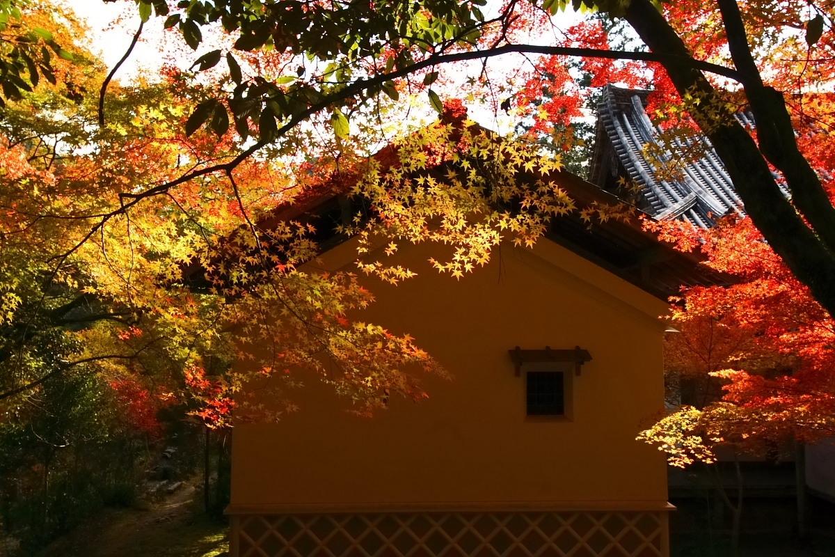 京都 高尾 <西明寺> 紅葉 2_f0021869_23542682.jpg