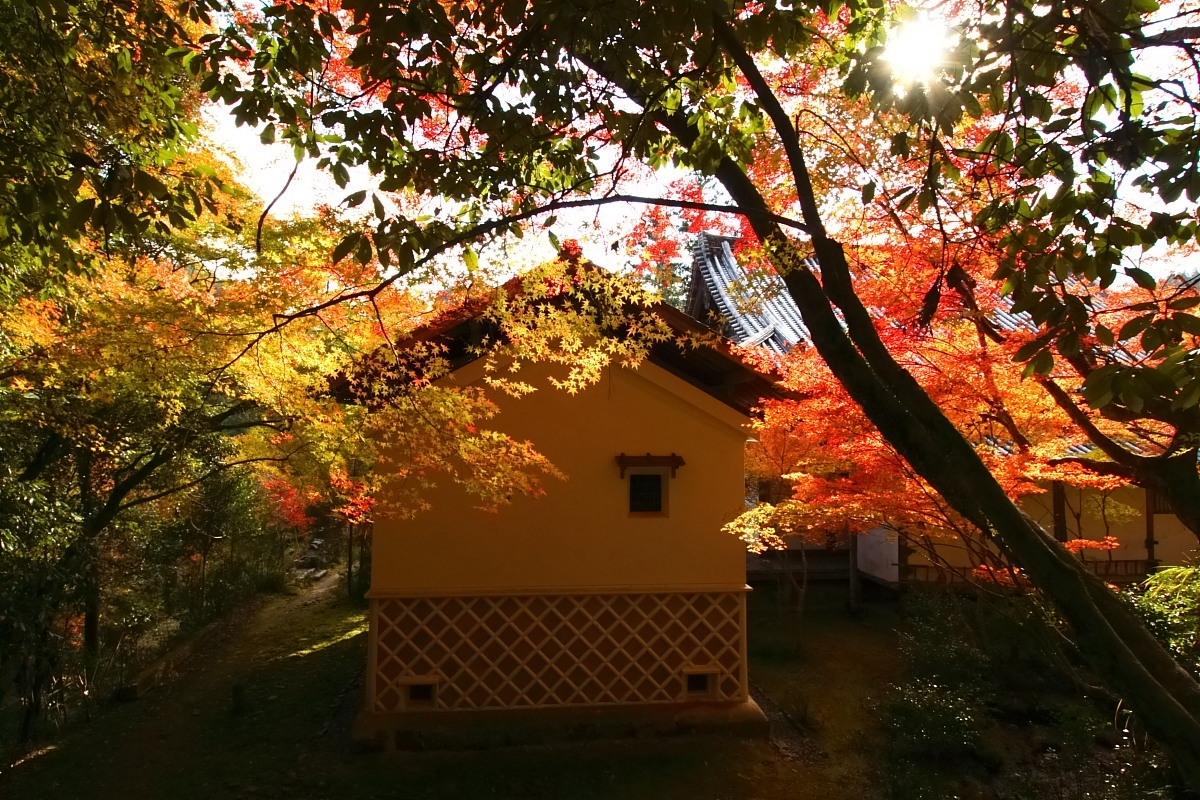 京都 高尾 <西明寺> 紅葉 2_f0021869_2356624.jpg