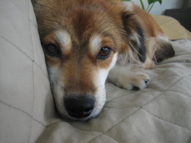 犬の一日_b0054391_12561521.jpg