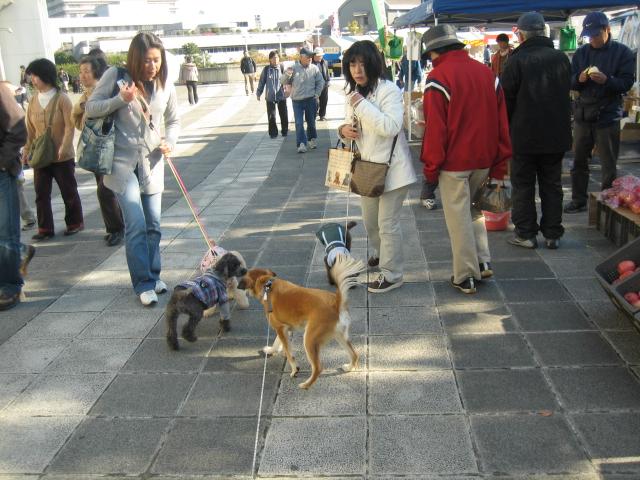 犬の一日_b0054391_1310569.jpg