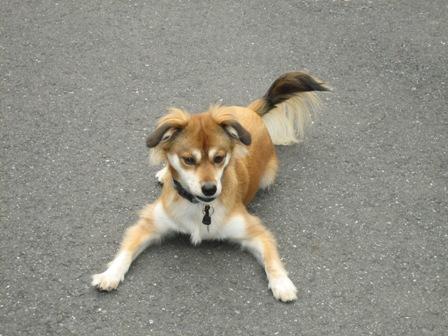 犬の一日_b0054391_13105761.jpg
