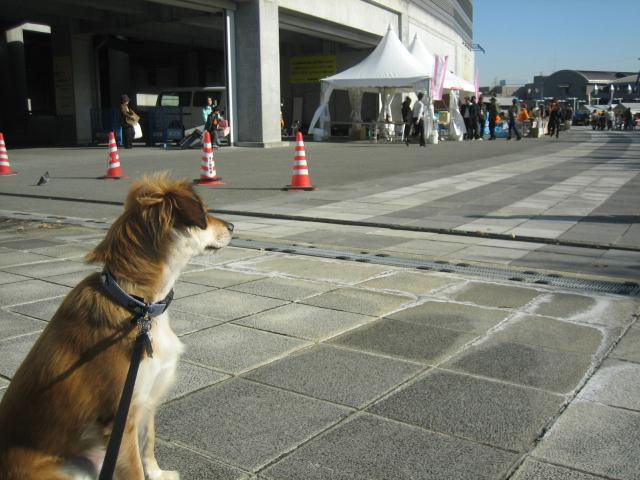 犬の一日_b0054391_13674.jpg