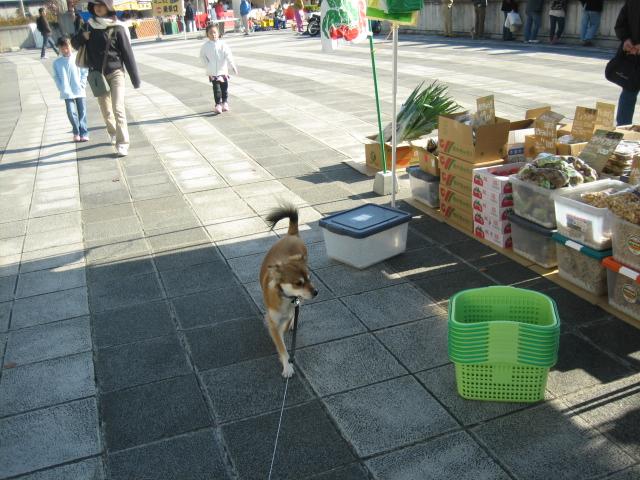 犬の一日_b0054391_139190.jpg