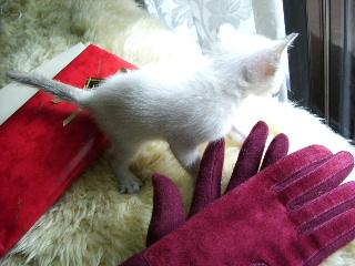 お漬物3種と手袋_f0007106_1913919.jpg