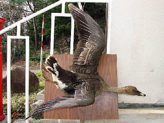 11月28日(火):鳥づく日_e0062415_1652182.jpg