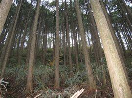 「未来の森」2年目スタート_e0002820_1553394.jpg