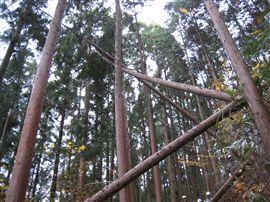 「未来の森」2年目スタート_e0002820_15572062.jpg