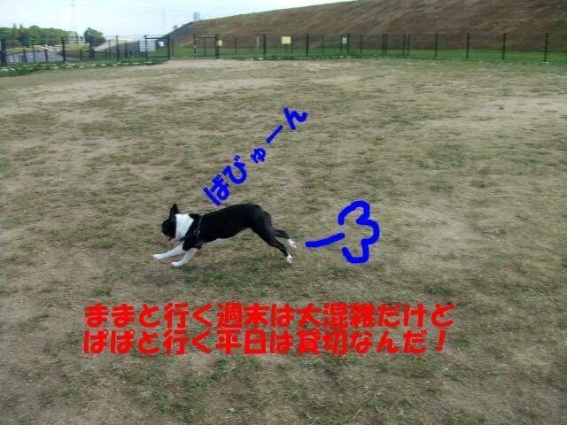 f0059334_9121423.jpg
