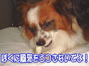 f0011845_054359.jpg