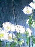 f0111845_1323962.jpg